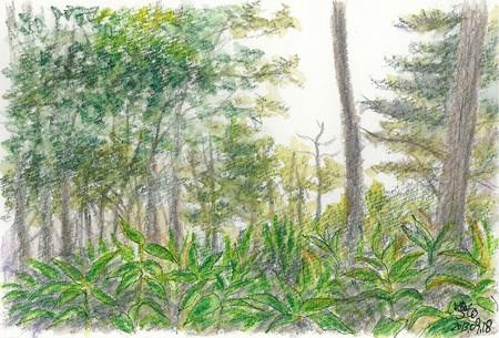 20130918雨の中の樹林