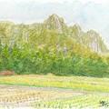 Photos: 20131228三倉岳大栗林にて