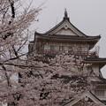 Photos: お城とさくら1