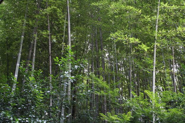 貯蔵庫の裏の森