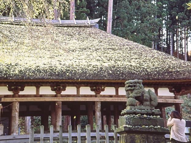 Photos: 新宮熊野神社狛犬 -阿-