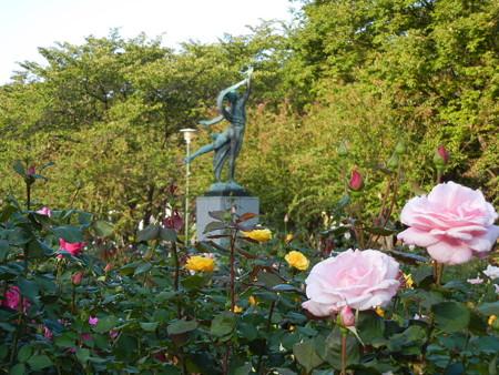 与野公園のバラ (27)