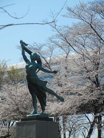 与野公園の桜 (1)