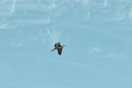 bird03262013dp2m_trim