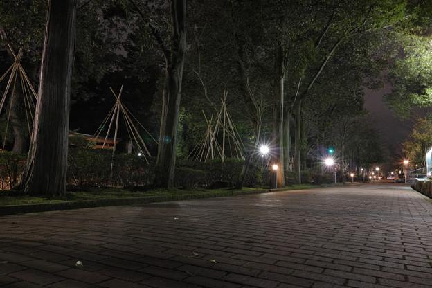 Photos: Street_at_night03022014dp1m01