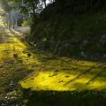 照らされる苔生した小道