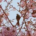 Photos: 花鳥風月