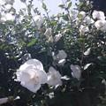 写真: 千穐楽のお祝いと朗報に。   #勘三郎さんにお花を