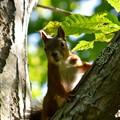 Photos: 木の陰からこんにちは