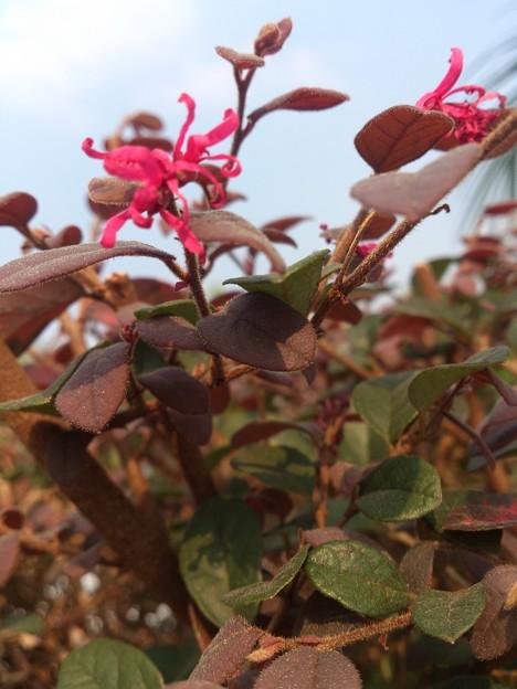 写真: 葉も花もぜんぶ紅葉