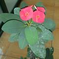 Photos: サボテンの花1