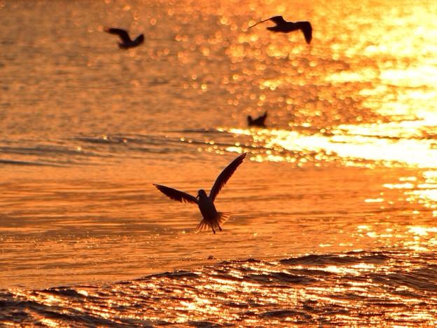 飛び立つカモメ@湘南・鵠沼海岸 #湘南 #藤沢 #海 #波 surfing #wave #mysky #夕焼け