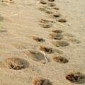 2013 02 27の散歩のしるし