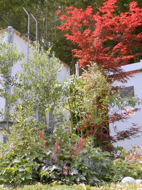 会社の庭 初夏の調和 (1)