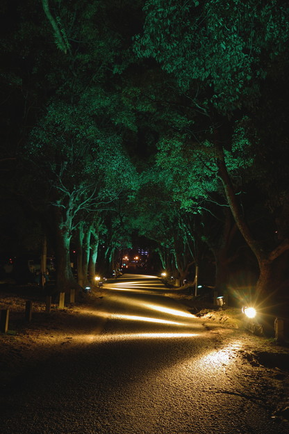 観世音寺参道ライトアップ