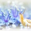 写真: 紫陽花ファンタジー