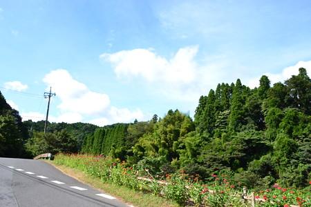 緑っ!@養老渓谷周辺 [8/16]