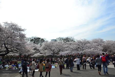 お花見!@上野公園 [3/28]