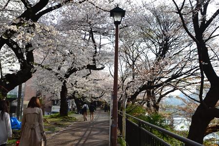 桜のトンネル@飯田橋-市ヶ谷 [3/28]