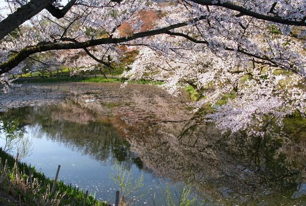 ☆春を映す池