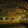 Photos: 花短冊回廊・夜355c