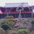 Photos: 月の松と桜の根533c