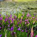 Photos: 池の畔