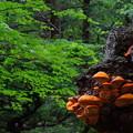 Photos: キノコの木