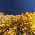 写真: 青と黄色の競演