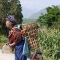 写真: 畑仕事に向かう老女