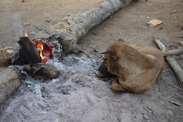 写真: 暖をとる犬