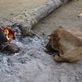 暖をとる犬