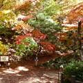 森林の紅葉を散策6