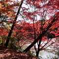 森林の紅葉を散策15
