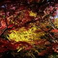 森林の紅葉を散策7