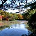 森林の紅葉を散策10