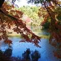 森林の紅葉を散策11