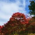 森林の紅葉を散策16