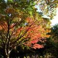森林の紅葉を散策17