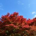 森林の紅葉を散策18