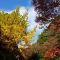 森林の紅葉を散策19