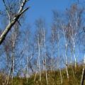 森林の紅葉を散策20