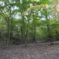 森林植物園・駄作の撮り流し