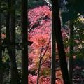 瑞宝寺公園の紅葉1-2