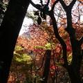 瑞宝寺公園の紅葉1-3