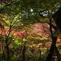 瑞宝寺公園の紅葉2-1