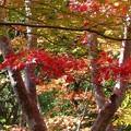 瑞宝寺公園の紅葉2-3