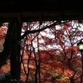 瑞宝寺公園の紅葉2-4