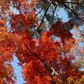 瑞宝寺公園の紅葉2-6