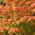 瑞宝寺公園の紅葉3-4